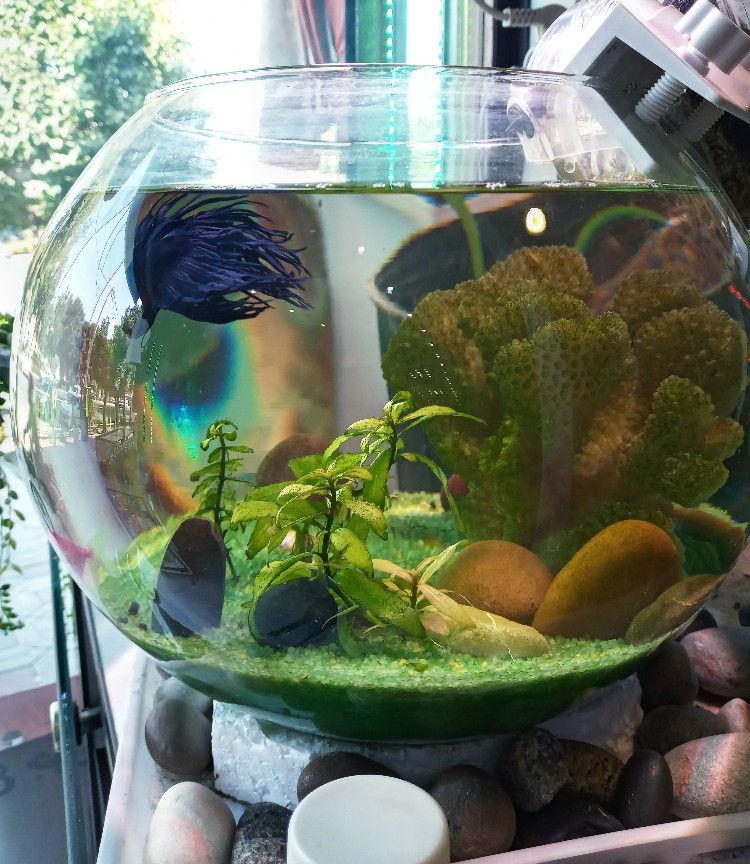 دکورآلین تنگ ماهی زیبا ،کامل با تمام امکانات ،تصفیه،نور مناسب ،گیاه ،مرجان، ماهی،مناسب برای دکور منزل یا محل کار بهترین انتخاب برای یک چراغ خواب ،،بهترین انتخاب برای کادو به عزیزانتان