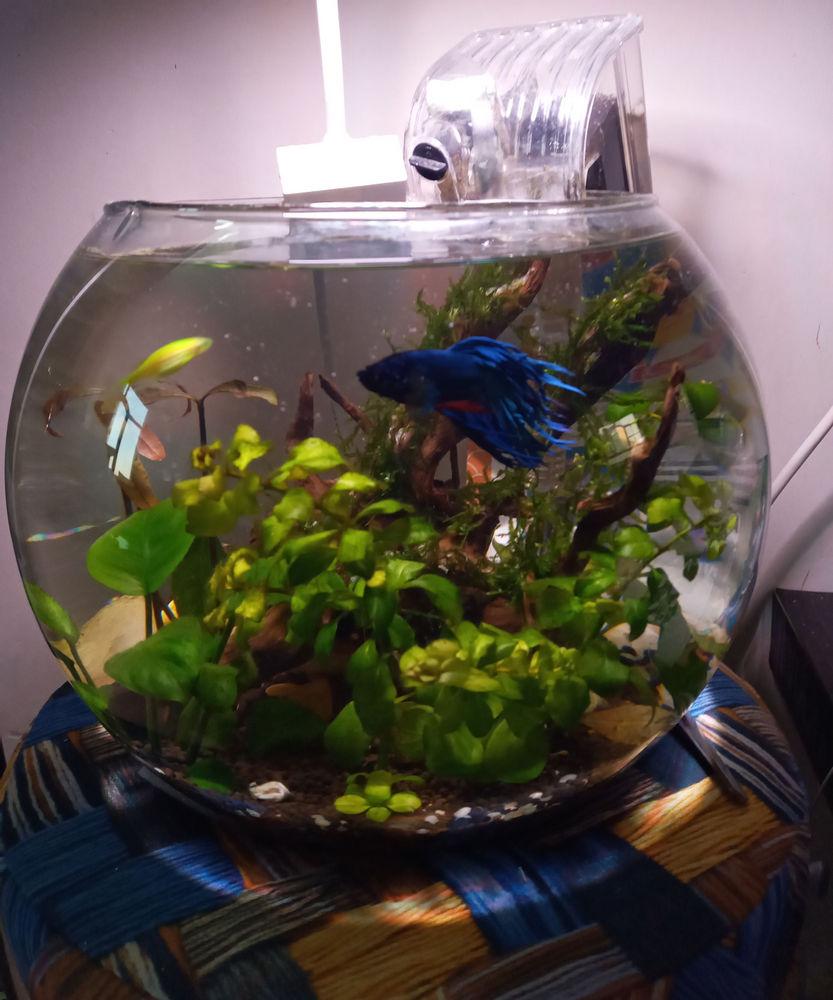 دکورآلین تنگ ماهی بسیار زیبا با محیطی آرامش بخش گیاه طبیعی ماهی های زیبا دستگاه تصفیه و نور مناسب فضای کمیاحتیاج داره هرجایی می تونید بزارید چون خودش نور مناسب برای ماهی و گیاه رو داره