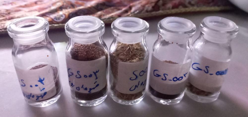 دکورآلین بذر چمن اکواریوم ۵ نوع مختلف به شرط ،بدون زایعات، وزن هر بسته پلاستیکی ۵/مثقال میباشد